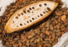 Какао-боб